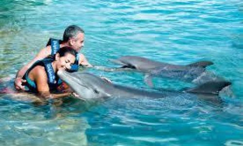 foto-dolphin-encounter