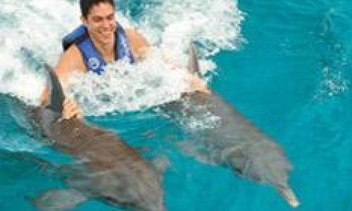 foto-dolphin-royal-swim